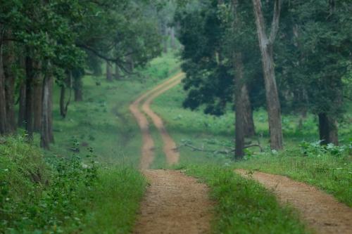 Nagarhole National Park, Karnataka-